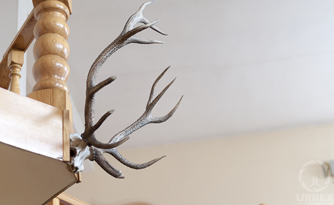 hunting trophy in abandoned house