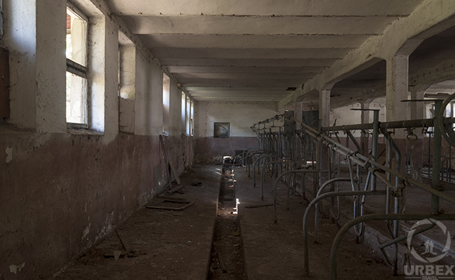 abandoned cowshed