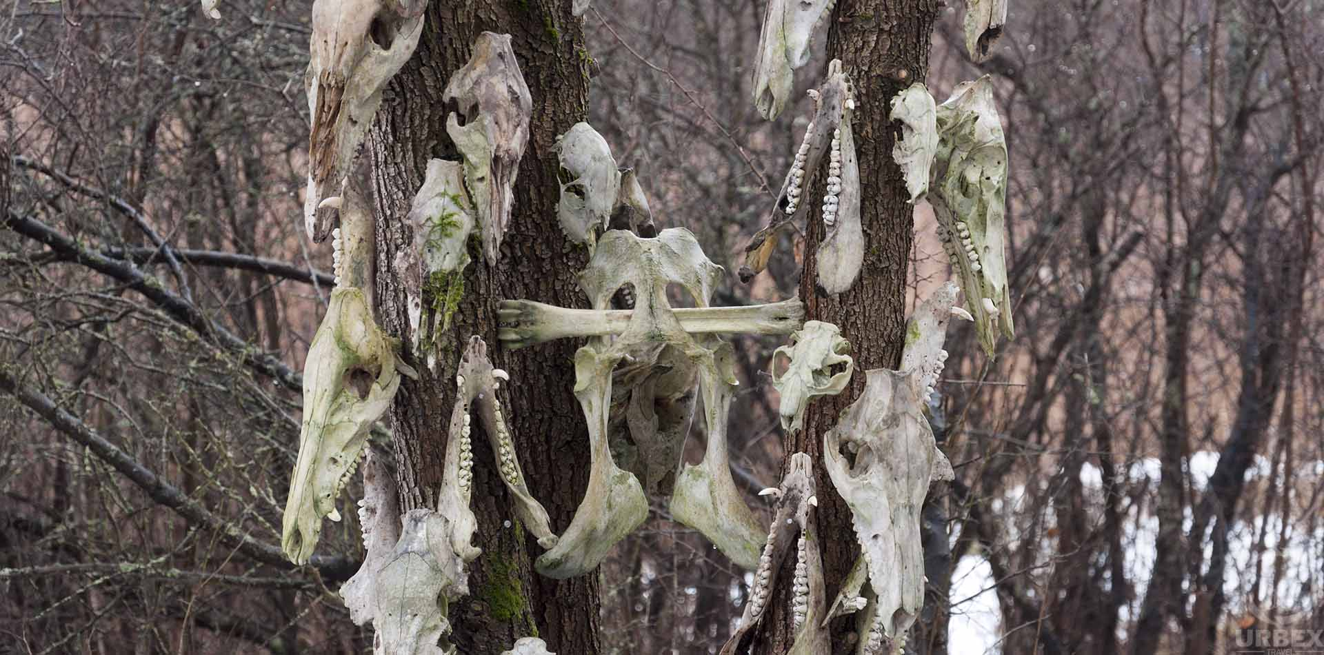Abandoned animal totem in the forest