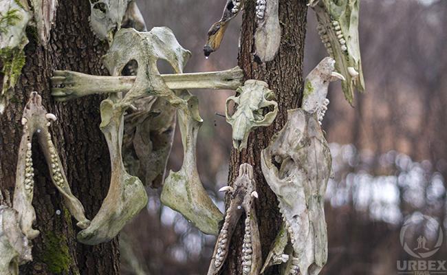 animal bones wholesale