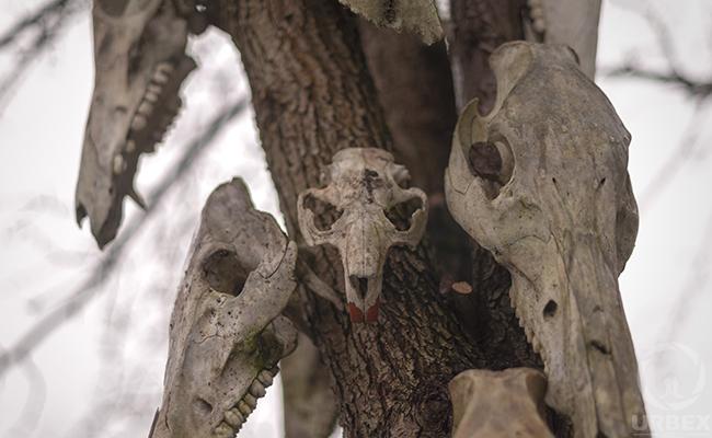 painted animal skulls