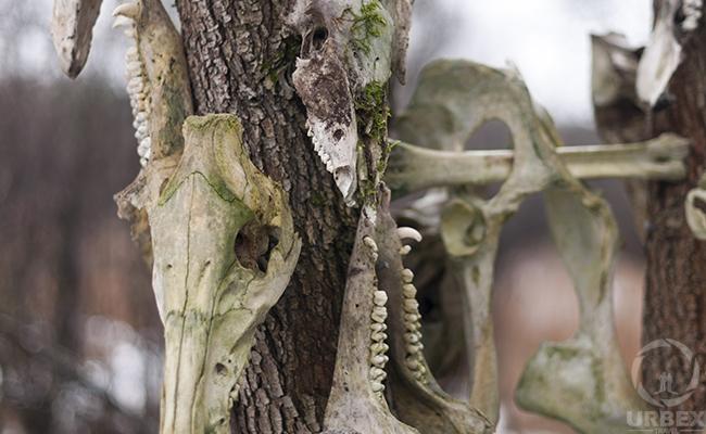 animal bones identification