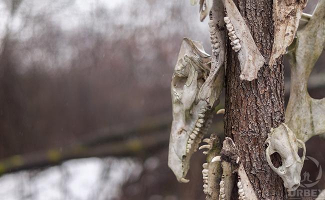 cool animal skulls