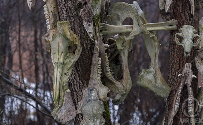 animal skulls art